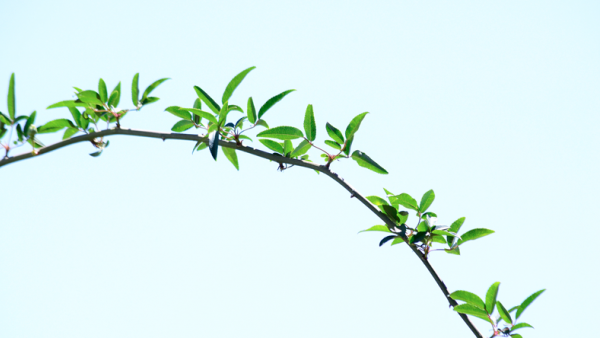 A branch with small leaves